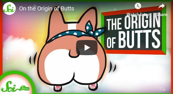 On the Origin of Butts – YouTube