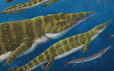 Sea Monster Fossil Discovery – CBC – submitted by Kris Lee